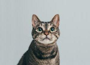 保護犬・保護猫の写真展や譲渡会なども!チャリティーイベント「みんなイヌ、みんなネコ」