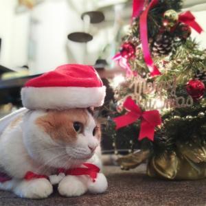 びわこファミリーレスパイト主催オンラインクリスマス会のお知らせ