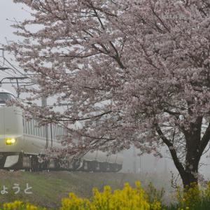 山陰本線 京都口 霜取りパンタ上げが終わる季節 2021.3.30