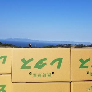 10月15~16日 レタス収穫
