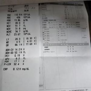 本日は咳が止まらず、真田山プールに行かずクリニックへ。迅速血液検査で白血球数11090。CRP定量8.12。血中濃度は96%。4連休があるので薬を1週間分もらいました。