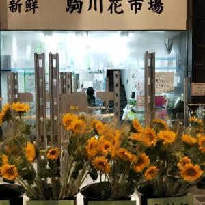 本日は明日の墓参り用の仏花を買うため駒川商店街へ。通常価格より100円アップの仏花を6束買いました。