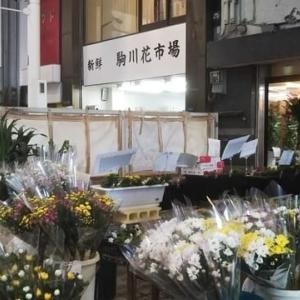 本日は墓参りに使う仏花6束を買うために駒川商店街へ。200円の仏花が5本しかなかったので250円の仏花を6本。一級河川・駒川に天神橋がかかっているのに驚き。