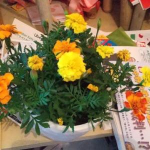 昨夜スーパーフレスコ駒川店で398円→198円に値下げられたマリーゴールドの鉢を買いました。ええ方の鉢を他のおばはんに取られがっかり。