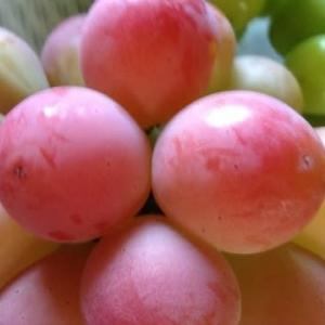 ブドウのおいしい保管方法「農家さん直伝」「冷凍できます」人気カフェと冷食メーカーに聞いた