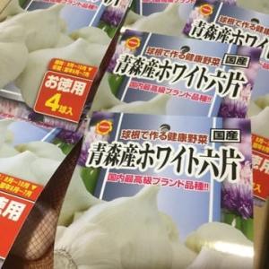 【アタリヤ農園】千葉・本社から良い種、良い球根㊗️お取扱店【まちのはなやさん】に、入荷
