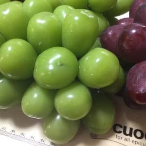 高級ギフトお葡萄様🍇【hanacafeーこだわり野菜派ー】は、今年最後の出荷、もうすぐセリへ
