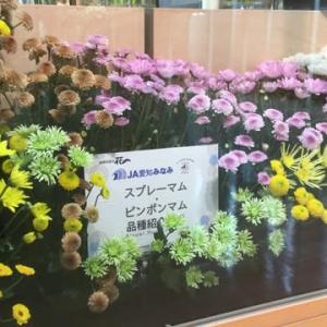 【hanacafe流エコ農法】で育てたカサブランカ満開❣️アトリエでおもてなし花に香りも良くて