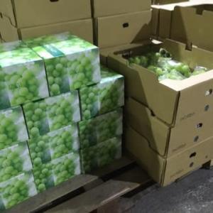 【#果物】台風14号の最中仕込み作業徹夜❣️「他には売らないで…」と嬉しいお言葉