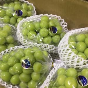 【#葡萄の日】玉張り、房型、糖度三拍子㊗️赤秀朝どり高糖度ギフト幻のお葡萄様1kg出荷❣️