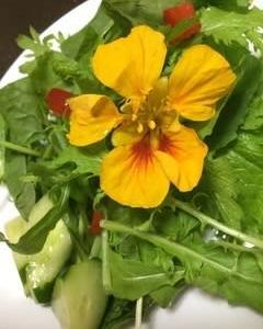 コープ太田店直売所へ6月出荷❣️何を栽培と聞かれる【まちのはなやさん】Garden&アグリ事業部✌️