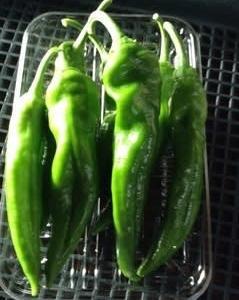 菜園メンテナンス訪問❣️hanacafe流エコ農法DE元気になる様子に感動🥺♩〜♬〜♩【#Garden療法】