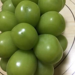 朝どり【クィーンニーナ】糖度20度越え㊗️幻の赤お葡萄様が🍇届きました✌️農家様の優しさを感じます🙇♀️