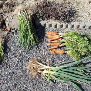 週末農業(令和元年11月①)