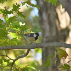 野鳥撮影日記(令和元年11月④)