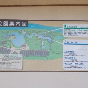 管理釣り場日記(令和2年4月①・なかがわ水遊園釣行)