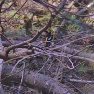 野鳥撮影日記(過去の写真①)