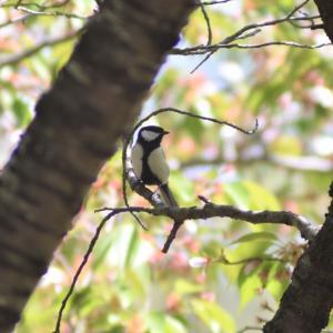 野鳥撮影日記(令和元年5月①)