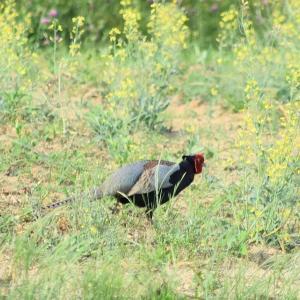野鳥撮影日記(令和元年5月⑤)