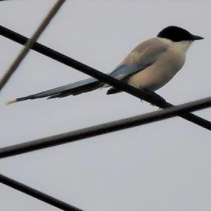 野鳥撮影日記(令和元年6月➁)