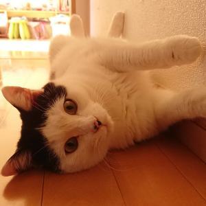 可愛いからって見つめちゃいけない!? 猫さんの目を凝視すると嫌われる理由