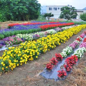 今日は 長崎の慰霊の日