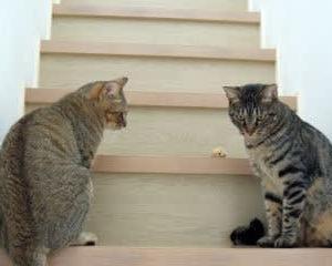 階段で遊ぼう