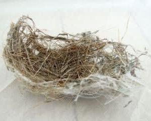 鳥さんの巣だ