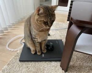 むさし、ノートパソコンに乗る