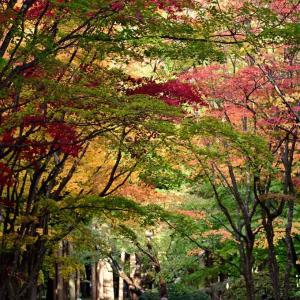 香雪園の紅葉を見に行ってきました(下調べ)