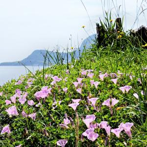 チャリンコぎこぎこ昼から散歩 大森浜と函館公園どっこいしょ