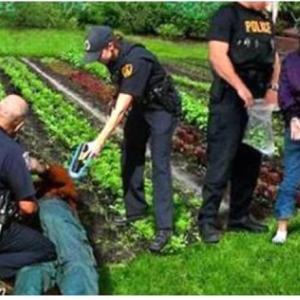 なんということでしょう?家庭菜園禁止法が採決されようとしています。【自家農園は禁止です。】