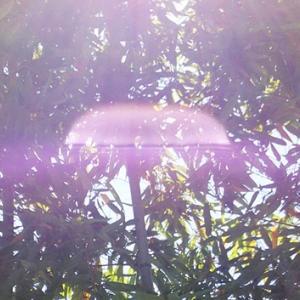 神社でUFOみたいなレンズフレアと太陽曼荼羅(19.5.25.土)