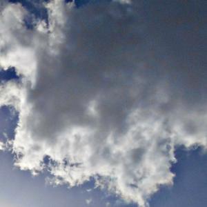 噛みつく。沢山のお顔がある雲。(20.1.8.水)