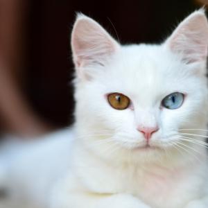 白猫さんがパチンカスを煽った結果