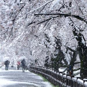 ☃雪見と花見🌸