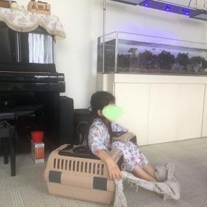 真央さんが亡くなって3年… ママのタオルを持つ麗禾ちゃんの写真に泣ける…市川海老蔵がSNSで不安を吐露(まとめブログ)