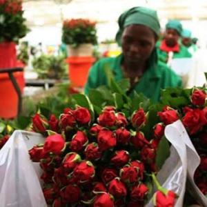 【現地報道に見るケニア市場の状況】新型コロナウイルスにより100万人以上が失業:2020年6月4日付けDaily Nation紙