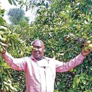 【現地報道に見るケニア市場の状況】新型コロナウイルスによりオレンジ農家に追い風:Daily Star紙