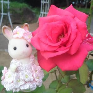 薔薇バニア