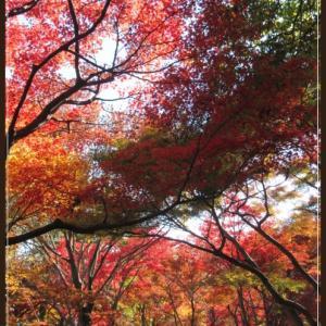 神代植物公園散策~「park」でお茶