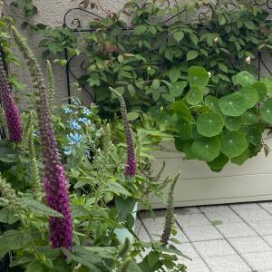 屋上の植物