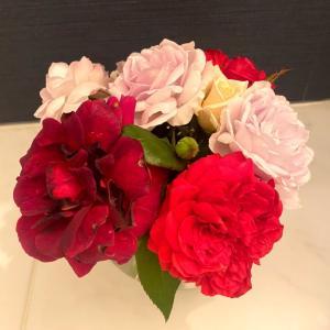 つるバラと肥料と花摘み