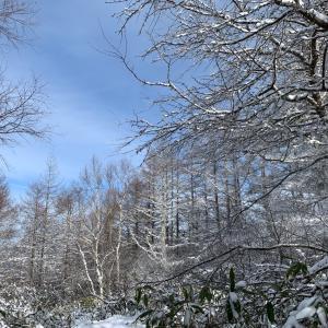 【入笠山 登山】 冬山登山入門! 幻想的な森を抜けて日本アルプス大展望