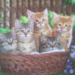 【100日間波動アップ実践企画】うれしい飼い猫の変化!実践21日目、募金継続26日目