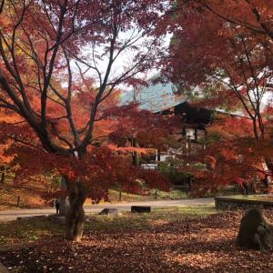 九品仏・浄真寺の紅葉