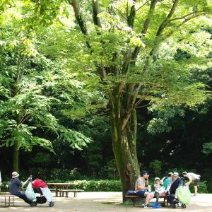 東高根森林公園へ
