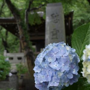 雨の日はブルー、いやあじさい寺