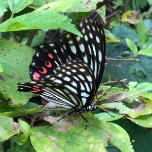 【秋の蝶】のことなど