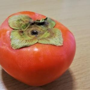 富有柿(ふゆうがき)の思い出